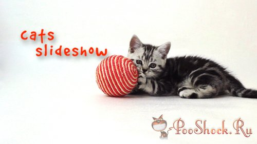 VideoHive - Cats Slideshow (AE-Project)